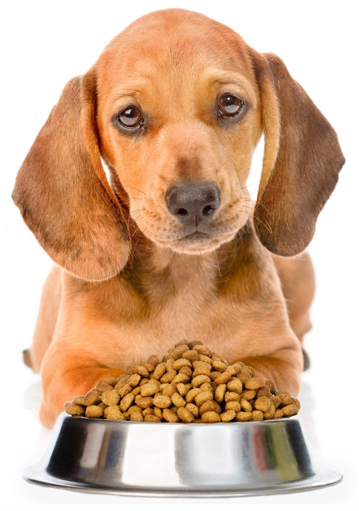 pet food benefits